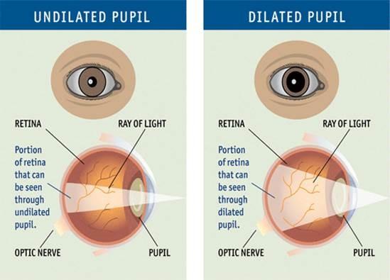 Die-Pupillenerweiterung-bei-den-Augenuntersuchungen