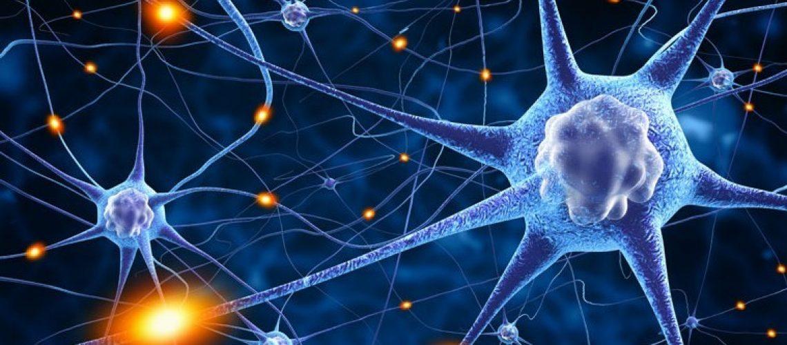 neuroplast