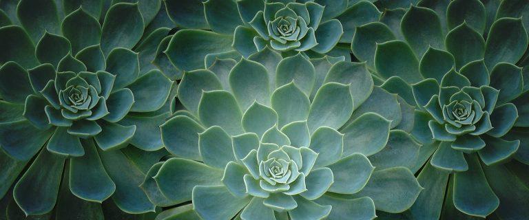 grünes Pflanzenmuster